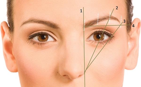 Чтобы брови производили должный эффект, следует правильно определить линию изгиба