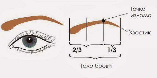 Перед выщипыванием следует определить линию бровей